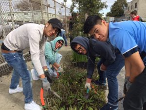volunteers with green infrastructure