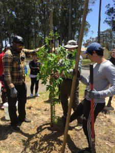 tree planting, urban canopy