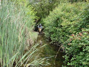 creek monitoring citizen science