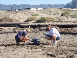 healthy watersheds beach cleanup volunteer