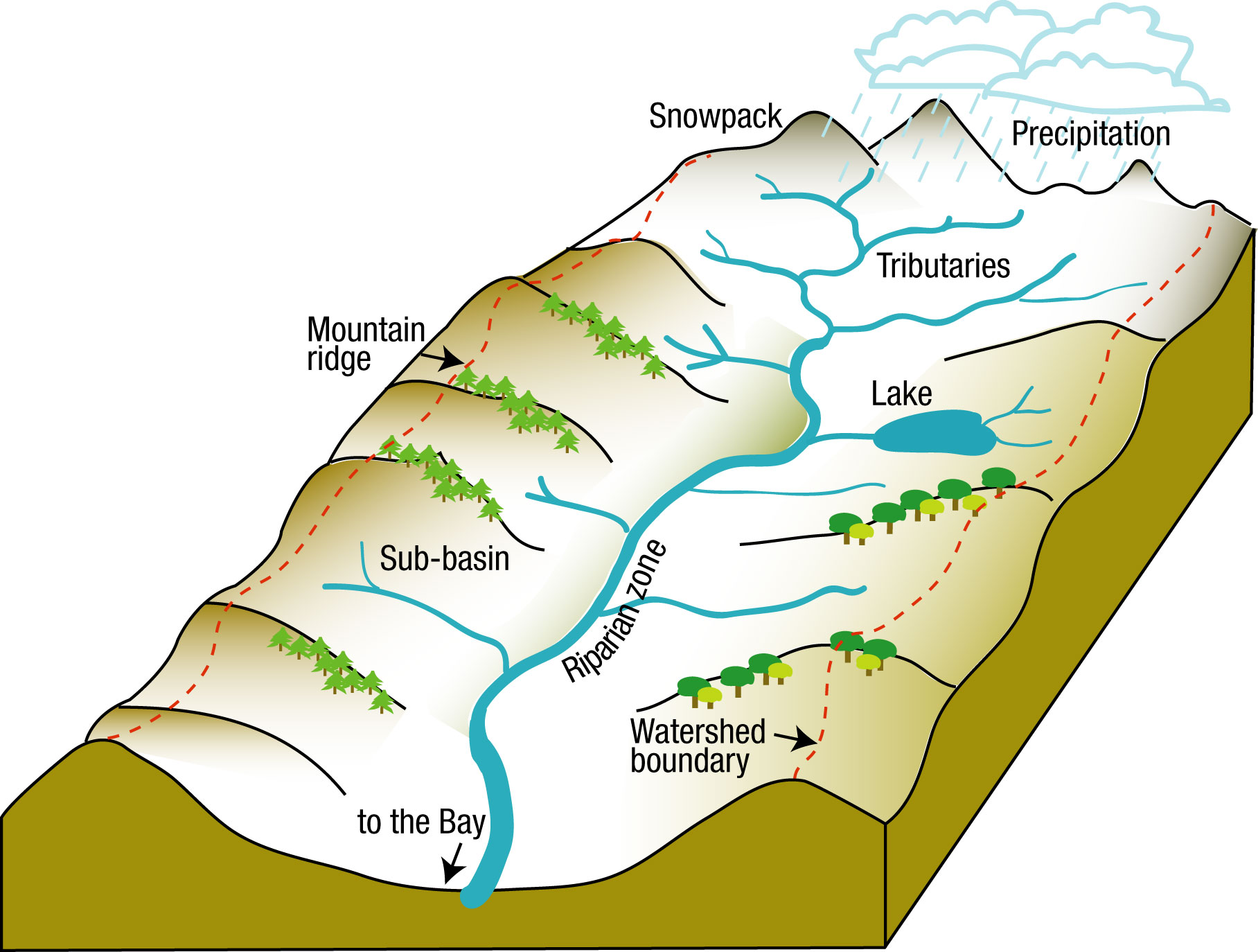 What Is A Watershed The Watershed Project