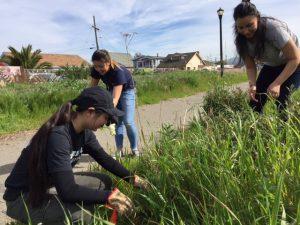 volunteers weeding green infrastructure